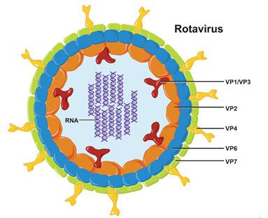 Признаки ротовируса