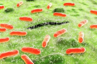 бактерии эшерихиоза
