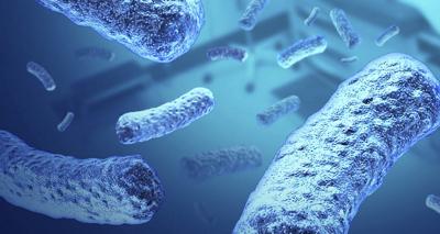 Salmonela typhi