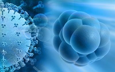 Особенности цитомегаловирусной инфекции у детей и его опасность